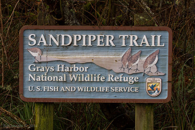 The Sandpiper trail in the Grays Harbor National Wildlife Refuge.