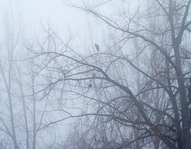 GBH is early morning fog.