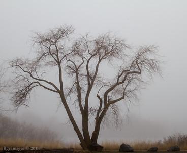 Tree Portrait.