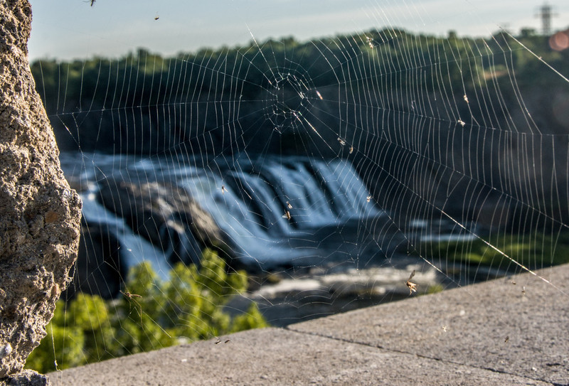 Cohoes Fall Web