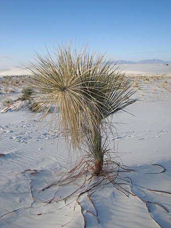 White Sands National Monument, New Mexico (19)