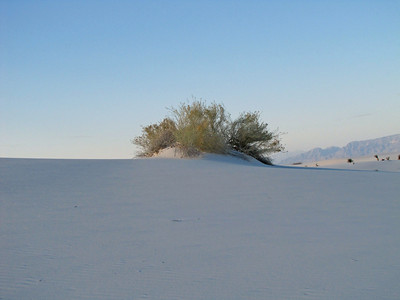 White Sands National Monument, New Mexico (16)