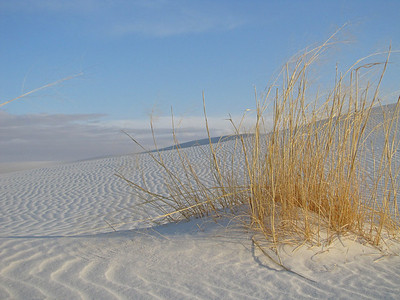 White Sands National Monument, New Mexico (8)