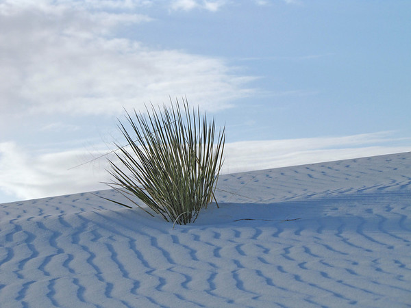 White Sands National Monument, New Mexico (17)