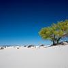 White Sands Tree