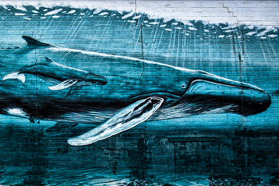 Whale on Wall