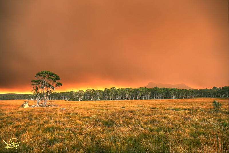 Life on Mars, Forest Fire, Tasmania