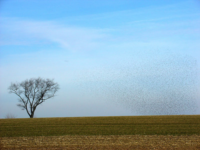 Lone Tree and Bird Cloud