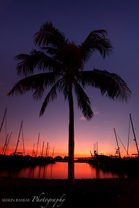 Miami Palm Tree Silhouette at Sunset