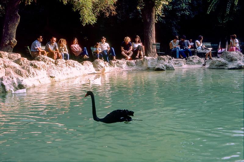National Gardens of Athens - Black swan
