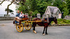 Horse & buggy ride by Muckross Lake & House - Killarney