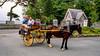 Horse & buggy ride by Muckross Lake & House - Killarney
