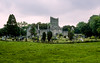 Killarney National Park - Muckross Abbey ruins (1448)