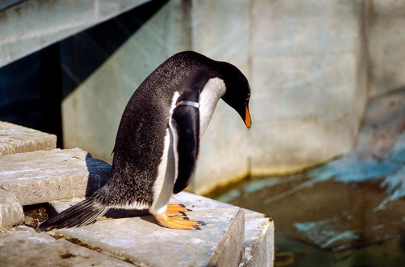 Ueno Zoo - Penguin - 1985