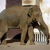 Ueno Zoo - Elephant - 1985