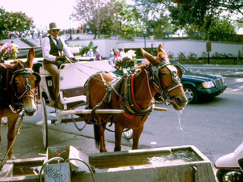 New Orleans - Donkey at the water trough - 1997