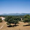 Spanish olive tree orchard