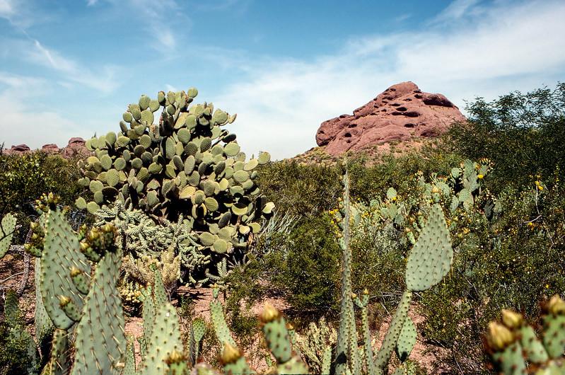 Saguaro National Park - 1993