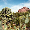 Saguaro National Park - 1993