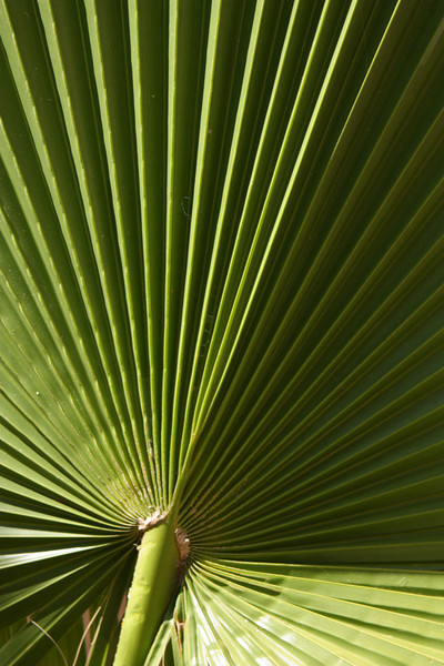 Leaf detail, Baja California, Mexico