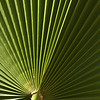 Leaf detail, Baja California, Mexico
