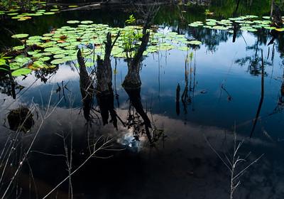 Woods Pond NC