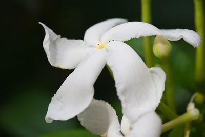 Barbados-0871