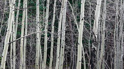 1410_Colorado_4240
