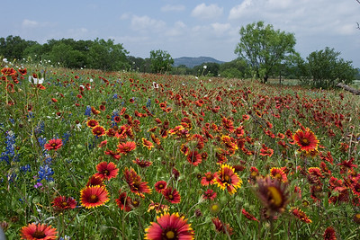 HillCountry-0285