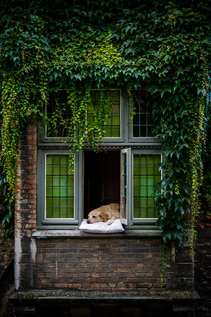 the most famous dog in bruges - Fidel