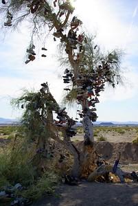 Shoe Tree, Mojave Desert