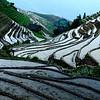 Longji Terrace Field