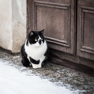 cat at the door