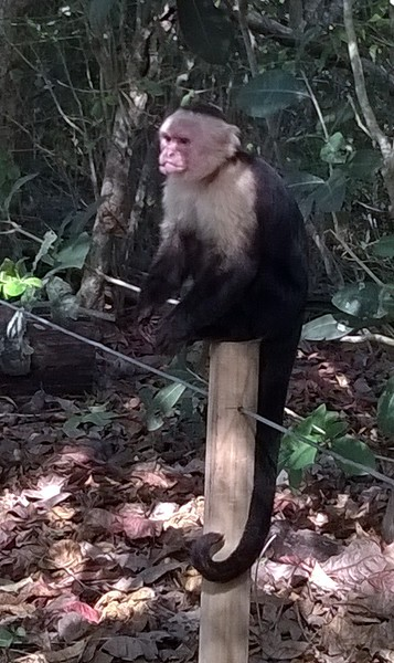 This monkey had a fight and thus its mouth is a little lopsided.