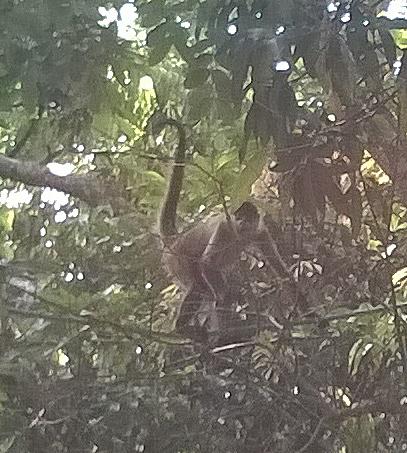 Agile climbing monkeys.