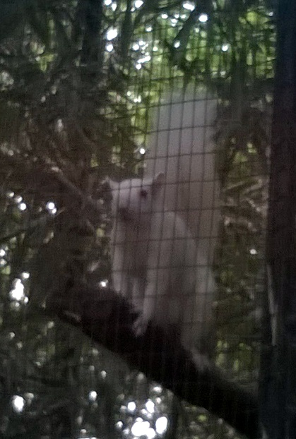 Is it a ghost or white squirrel?