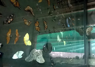 The Doka Estate had a beautiful butterfly garden where the insects flew around from plant to plant.
