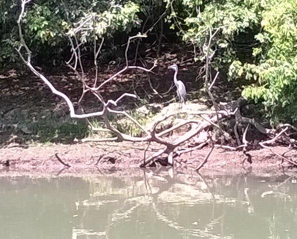 We saw many water birds.
