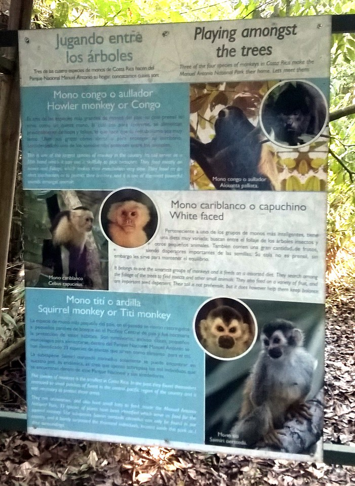 Some of the monkeys we might discover here.