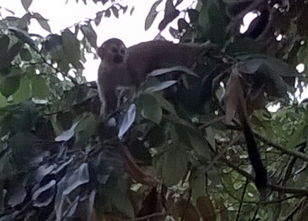 And monkeys right off the balcony.