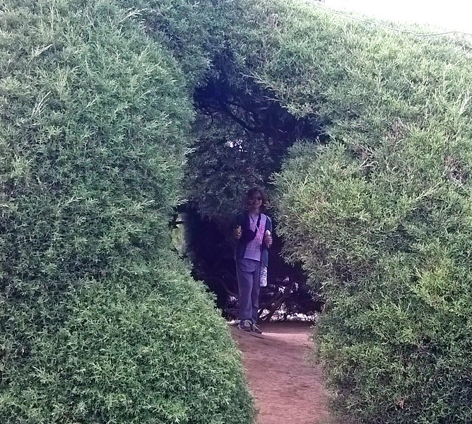 Hide and seek amongst the bushes.