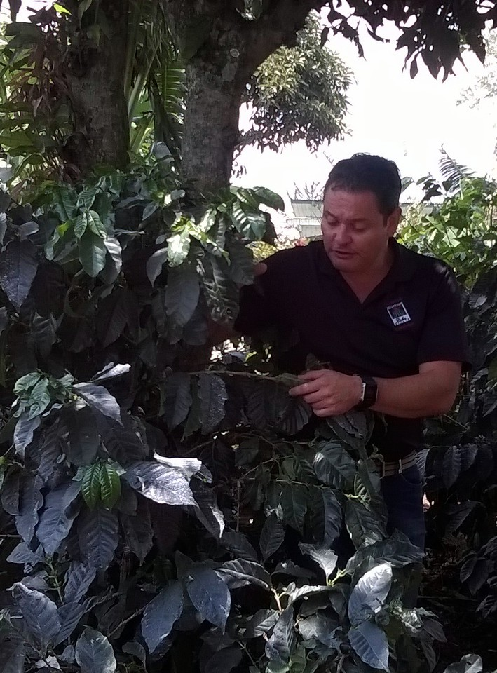 Our guide tells us about the process of raising, cultivating, and roasting coffee.
