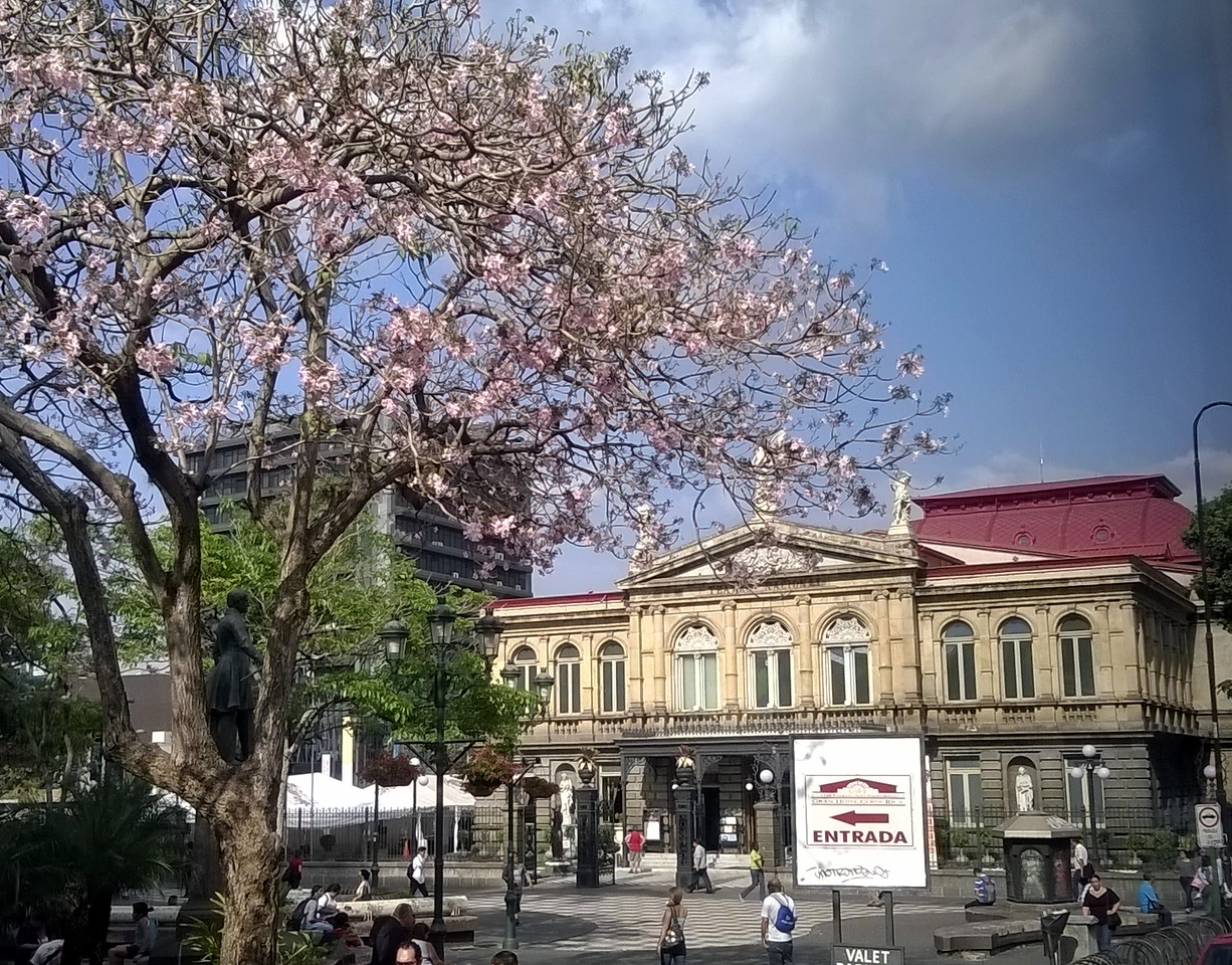 The flowering tree is a Savannah Oak which stands outside the Concert Hall.