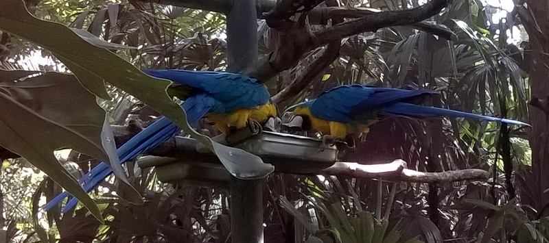The birds are so colorful!