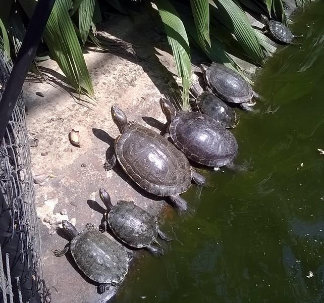 Turtles enjoying the sun.