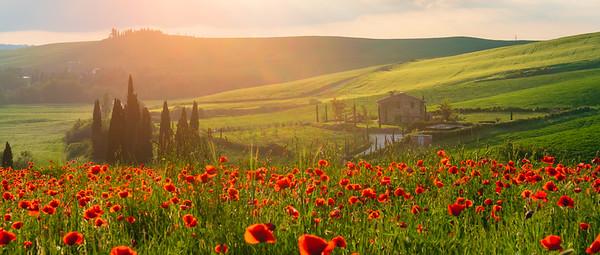 Asciano | Tuscany