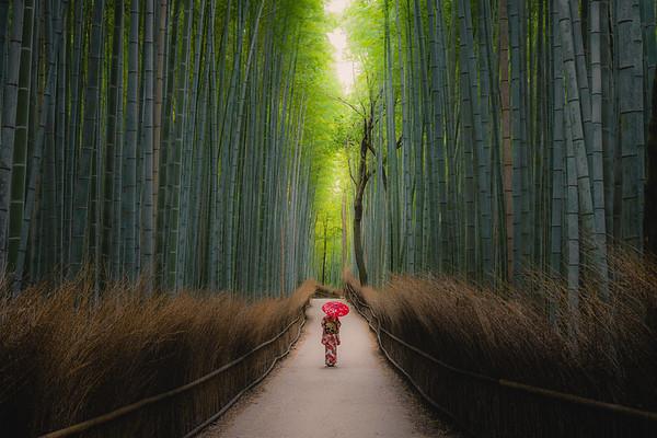 🇯🇵 Arashiyama Bamboo Grove | Kyoto