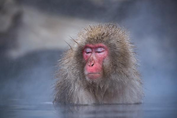 Snow Monkey | Jigokudani Monkey Park