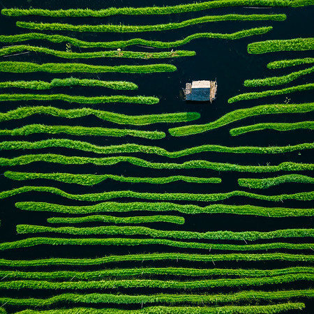 Floating Garden | Inle Lake