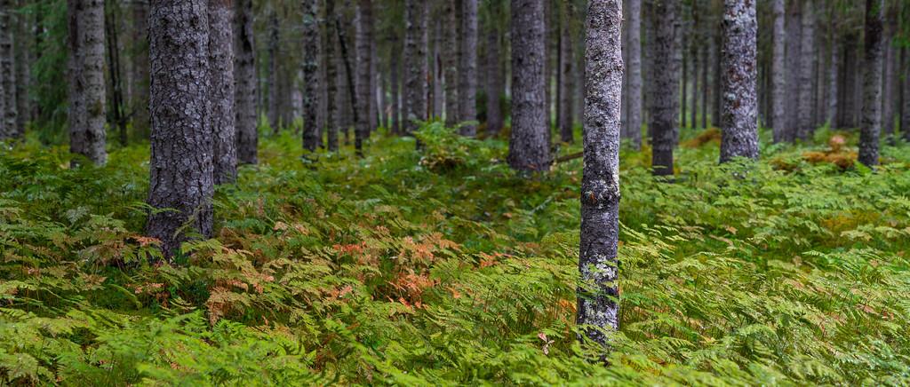 Norweigian Wood 3